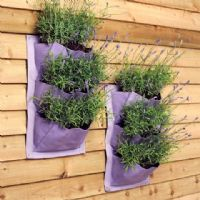 Lavender Verti-plant - grow up the wall